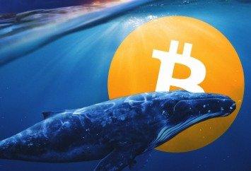 Guadagnare Bitcoin seguendo le Big Whales